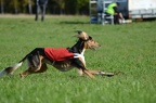 Lure Coursing - 01