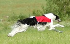 Lure Coursing - 05